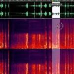 El gran olvidado: el audio y su edición