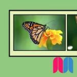 Proyecto práctico: crear marcas de agua para nuestras fotos