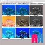 Tratamiento de imágenes con CSS
